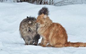 Картинка зима, снег, кошки