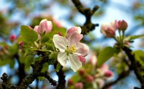 Обои цветы, дерево, весна