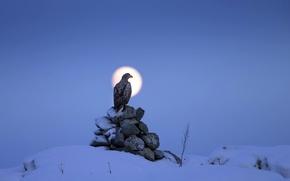 Картинка ночь, птица, орёл