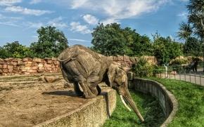 Картинка небо, слон, зоопарк
