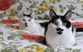 Обои одеяло, черно белые, мордочки, кошки