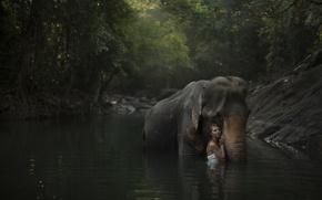 Картинка лес, девушка, река, модель, слон