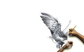 Обои бумага, птица, рисунок, руки, когти, карандаш, реальность