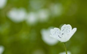 Картинка зелень, белый, цветок, лето, макро, природа, зеленый, поляна, растение, цвет, лепестки, маленький