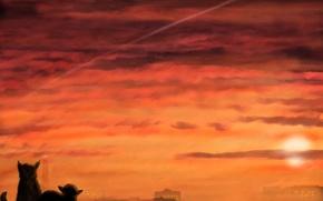 Обои облака, закат, Кошки