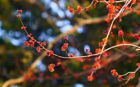Картинка цветы, природа, растение, ветка