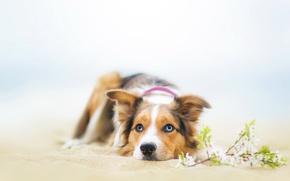 Картинка взгляд, природа, друг, собака