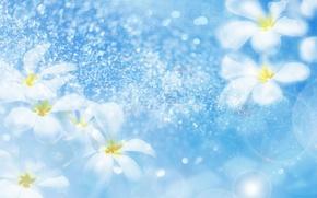 Обои блики, рисунок, вода, цветы, капли