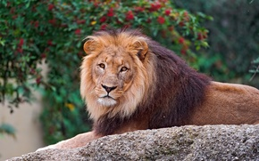 Картинка камень, лев, грива, лежит, смотрит