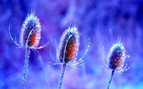Обои цветок, природа, растение, стебель