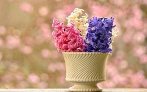 Картинка фон, ваза, гиацинты