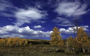 Картинка осень, лес, небо, облака, деревья, пейзаж, камни, береза
