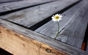 Обои цветок, радость, жизнь, одиночество