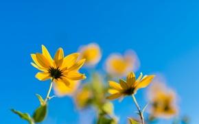 Картинка небо, цветы, боке