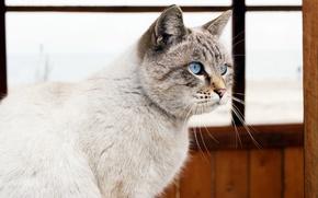 Картинка море, кошка, глаза, окно