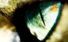 Обои Глаз, размытость, зрачок