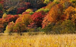 Картинка осень, трава, склон, деревья