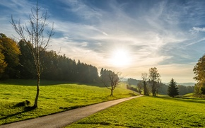 Обои лето, поля, леса, дорога, трава, зелень