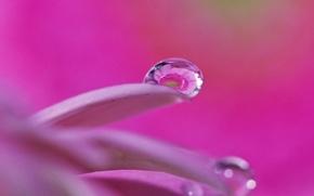 Картинка вода, капля, лепестки, отражение, цветок