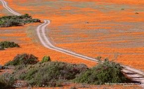 Картинка Wallpaper, Widescreen, Road, Fullscreen, S. Africa, Wildflowers, Namaqualand
