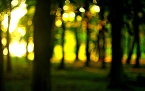 Картинка лес, солнце, макро, деревья, природа, widescreen, обои, размытие, wallpaper, nature, широкоформатные, background, macro, боке, bokeh, …