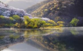 Обои природа, Япония, река, озеро, весна