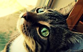 Картинка кошка, глаза, кот, шерсть, зелёные, котэ