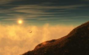 Обои солнце, небо, чайка