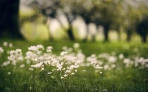 Обои зелень, трава, макро, деревья, цветы, размытость, белые