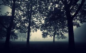 Картинка Природа, Вечер, Туман, Деревья, Лес, Мрак, Обои, Сумерки, Darkness, Tree, Мистика, Mist