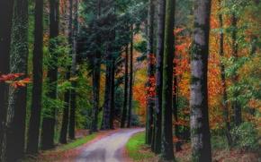 Картинка дорога, осень, лес, листья, деревья, природа