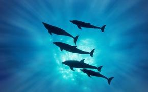 Обои дельфины, лучи, силуэт