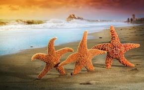 Картинка море, лето, звезды, пляж, песок