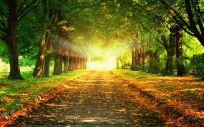 Картинка дорога, листья, деревья, пейзаж, закат, природа, красивая, road, trees, landscape, nature, sunset, beautiful, leaves, величественный, …