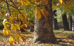 Картинка trees, park, autumn, leaves, morning, bokeh, cool