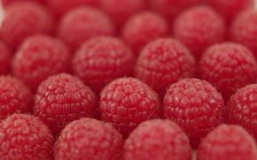 Обои малина, ряды, ягода