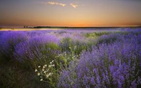 Картинка поле, лето, небо, трава, цветы, рассвет, ромашки
