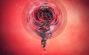 Картинка цветок, стиль, креатив, графика, red, рендер