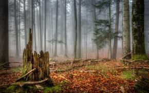 Картинка осень, лес, туман, пень