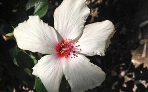 Картинка белый, цветок, красиво, white, flower, beautiful
