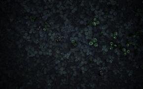 Картинка трава, капли, макро, роса, утро