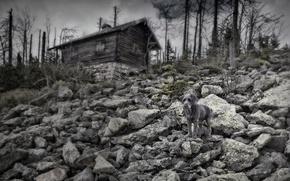 Картинка природа, дом, собака
