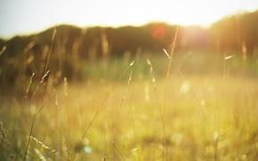 Картинка поле, лето, трава, солнце, макро, свет, природа, тепло, цвет, растения, колоски, травинки