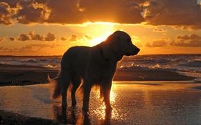 Картинка море, небо, вода, закат, собака
