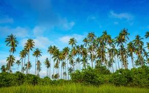 Картинка зелень, небо, трава, облака, деревья, тропики, пальмы, кусты, Малайзия, Bohey Dulang Island