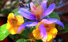 Картинка цветы, лепестки, линии, листья, сад
