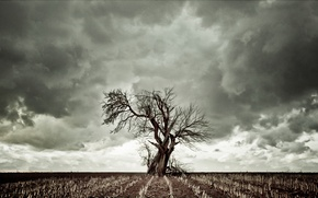 Обои тучи, сухая трава, небо, дерево