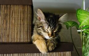 Картинка кошка, мило, уснула