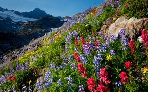 Картинка небо, цветы, горы, склон, луг
