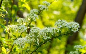 Картинка цветы, природа, кашица